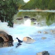 Blue Heron on Potomac River